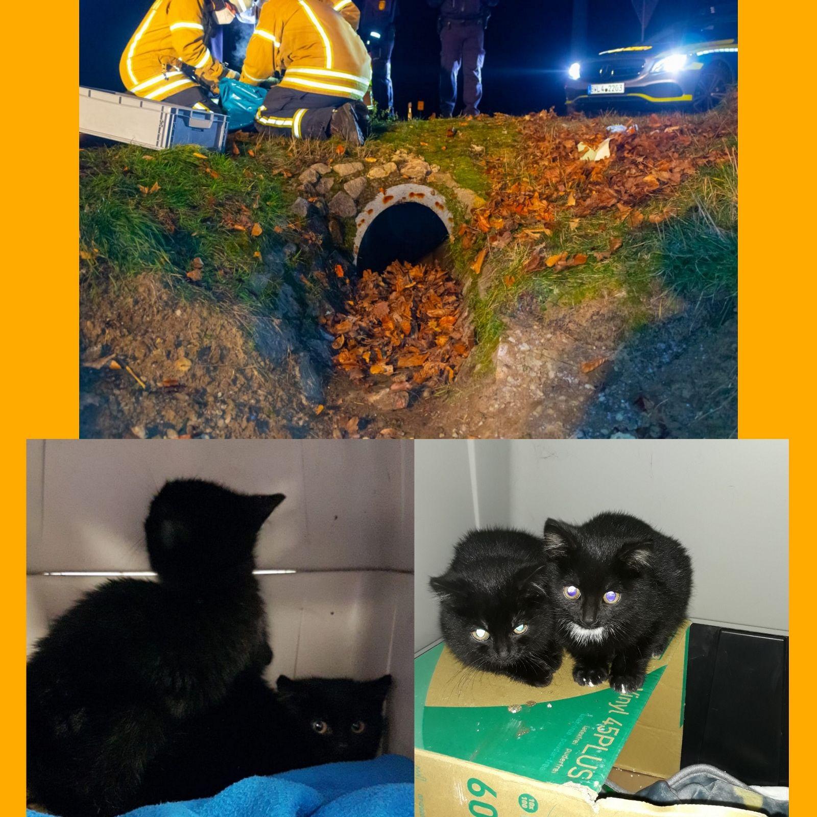 Katzenhilfe Pforzheim