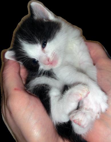 Wissenswertes über Babykatzen