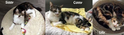 Kater Conny, Siggy & Katze Lilly