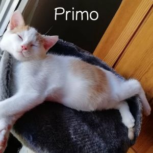 Katerchen Primo